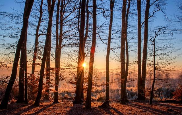 森を見て木を見よう